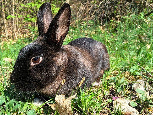 home roost how to help your rabbits stay cool this summer. Black Bedroom Furniture Sets. Home Design Ideas