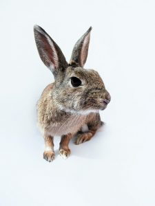 Signs your rabbit might be unwell