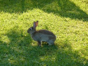 5 Ways to keep your rabbit cool