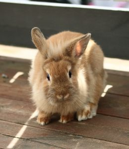 Rabbit care tips for children and adults