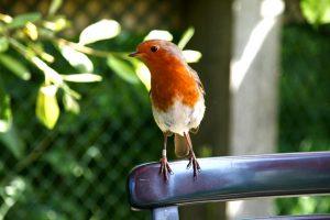 What to feed UK Garden Birds