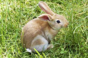 Rabbit enrichment tips