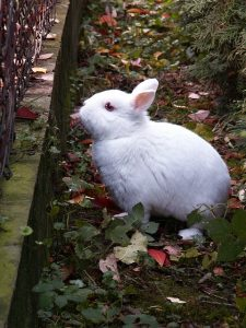 Halloween tips for rabbit owners