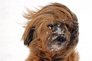Cold weather tips for dog owners