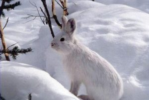 Cring for Rabbits in winter