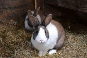 rabbit-966648_960_720
