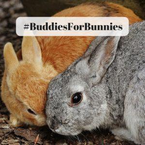 #BuddiesForBunnies RAW