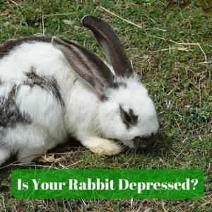 rabbit depressed