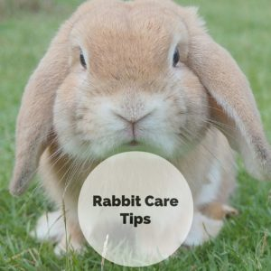 Rabbit care tips for springtime