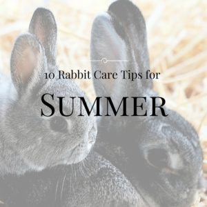 Rabbit Care Tips for summer