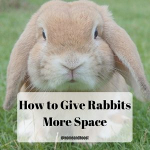 Give your rabbit more space