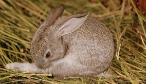Rabbits Rehabilitation
