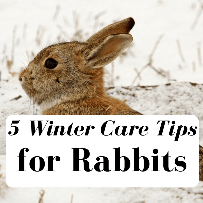5 Winter Care Tips For Your Rabbits