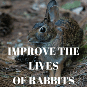 Improves the lives of rabbits
