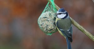 Should You Feed Garden Birds All Year Round