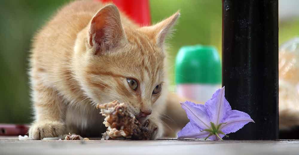 kittens going outside