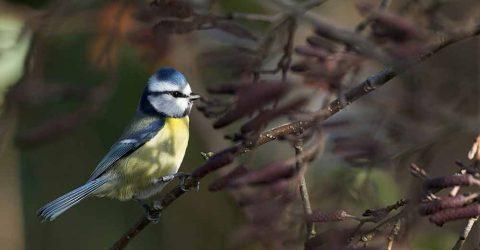 BK-Wild-Bird-SEED