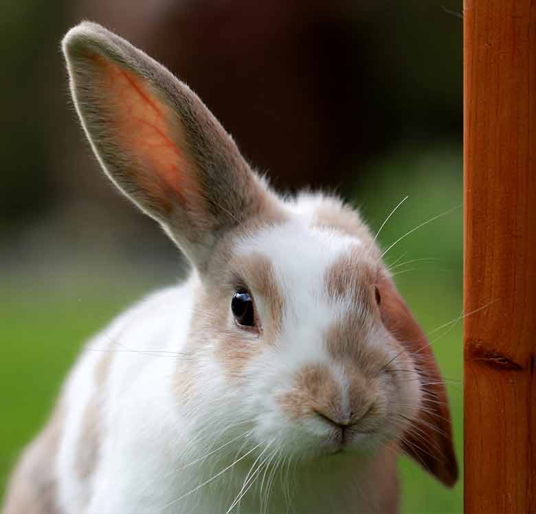 caring for outdoor rabbits