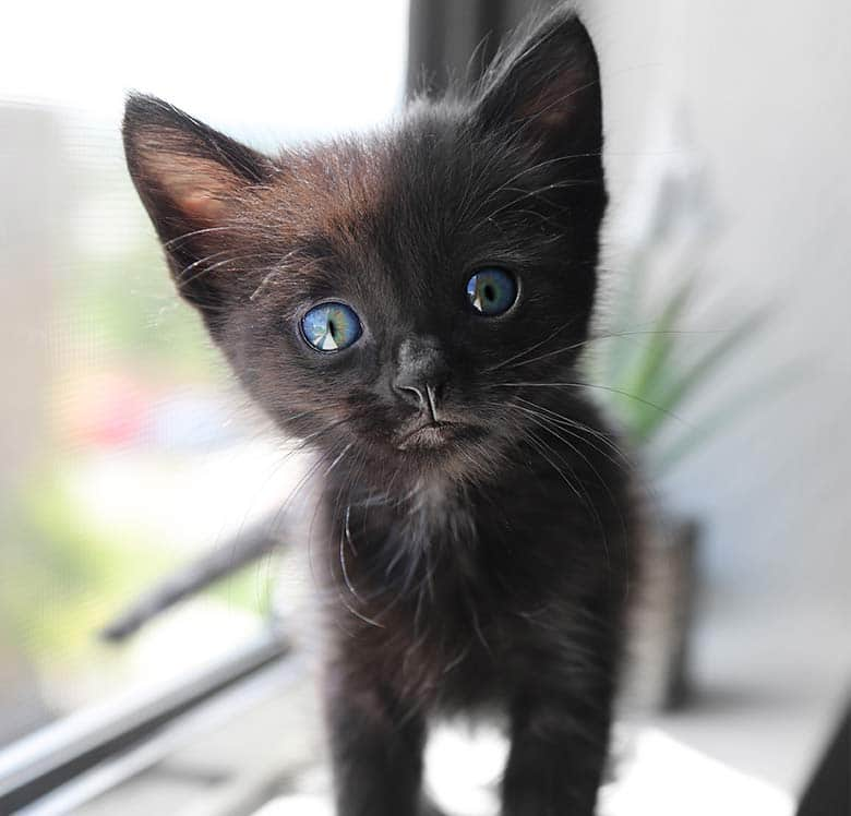 When Can Your Kitten Go Outside The Peace Of Mind Strategy