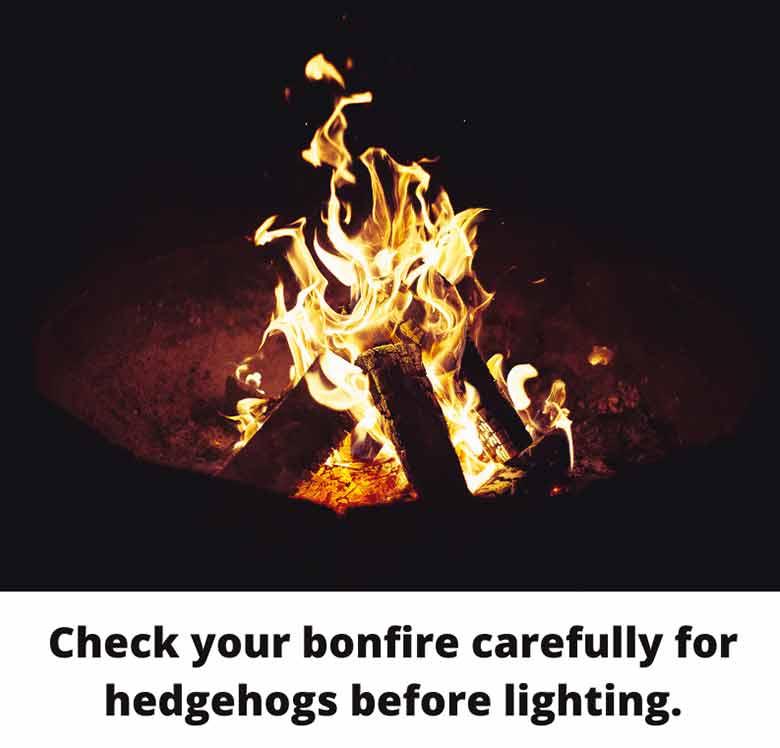 Check your bonfire carefully for hedgehogs before lighting.