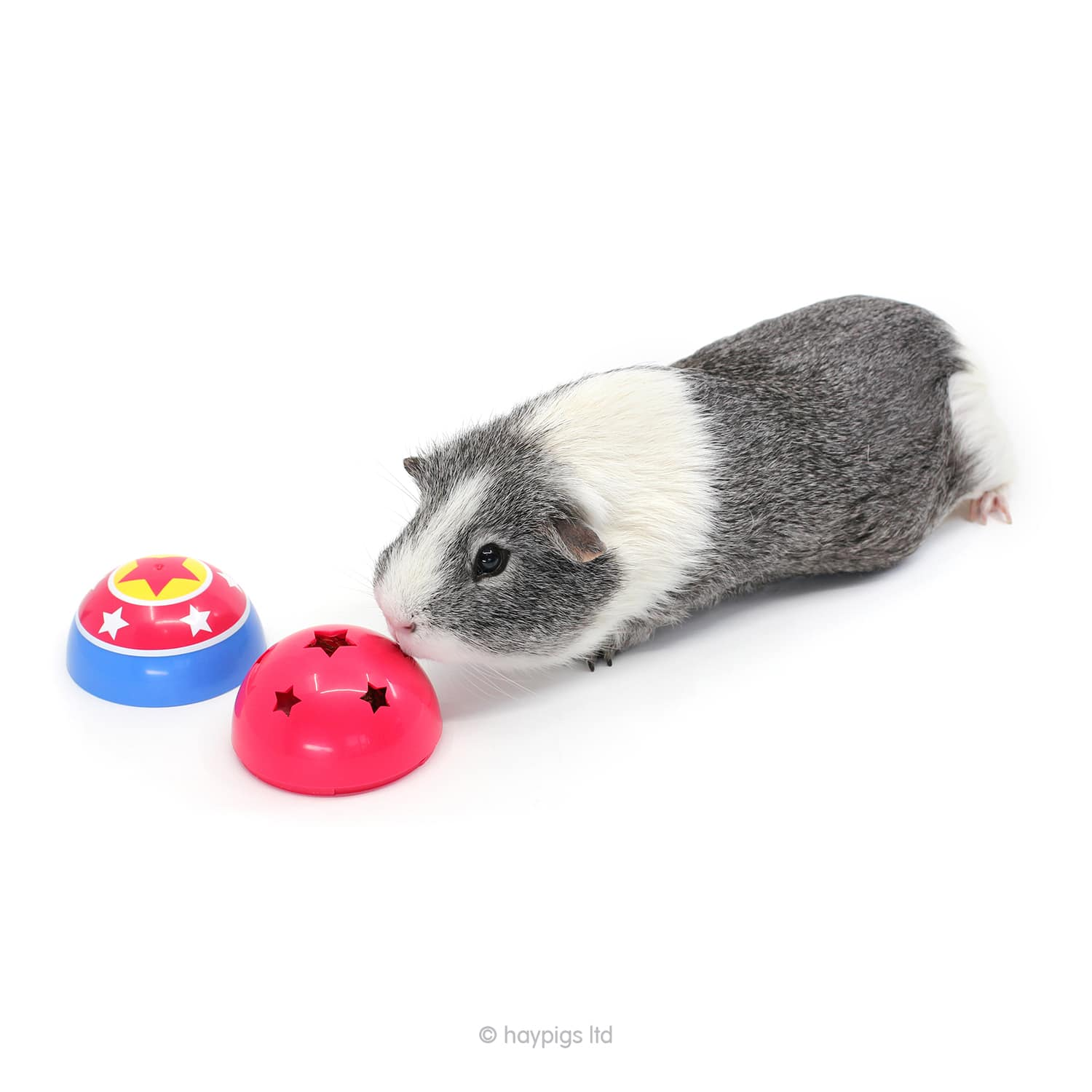 games to play with your guinea pig